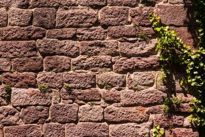 Burgmauer mit Efeu