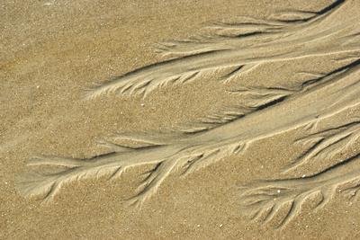Sandblume