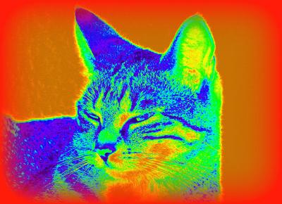 Katze in Falschfarbe