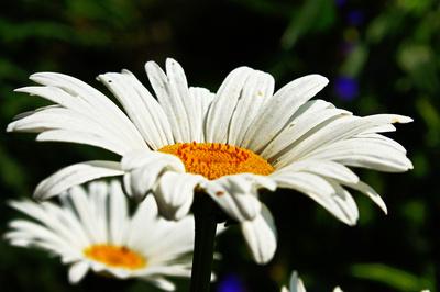 Weiß - gelb