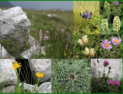 Pflanzenwelt auf dem Monte Baldo