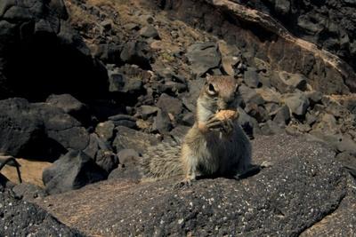 Streifenhörnchen 3
