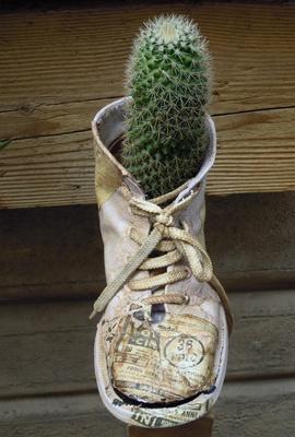 Schuhkaktus