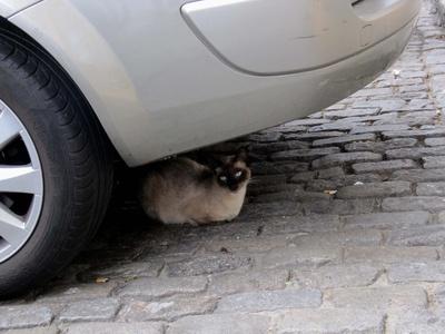 Katze und Auto