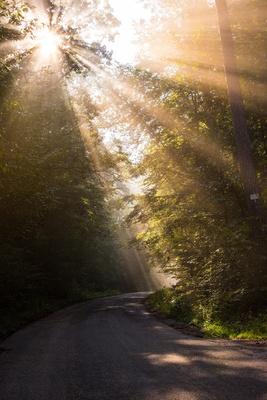 Waldweg mit Morgensonne im Nebel 1
