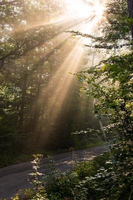 Waldweg mit Morgensonne im Nebel 3