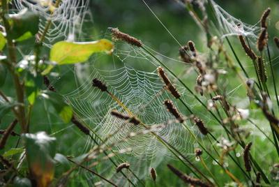 Altweibersommer Spinnennetz