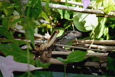 Reptilie in Grünen