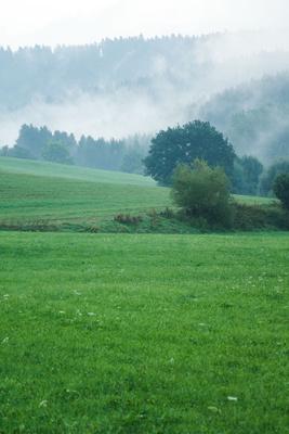 Herbstnebel im Wiesental mit Wald 03