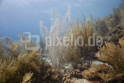 Kann es schöneres Unterwasser geben?