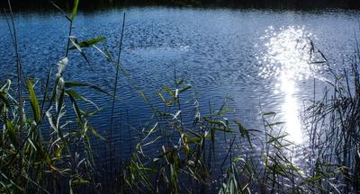Funkelnder Binnensee mit Schilf