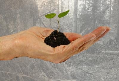 Natur in deiner Hand