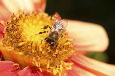 Noch schnell was Honig besorgen