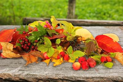 Herbstliche Impressionen (3)