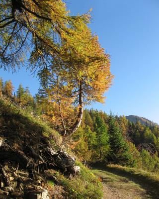 Der Herbst aus Bergsicht (5)