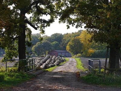 Herbstbild aus der Bauerschaft