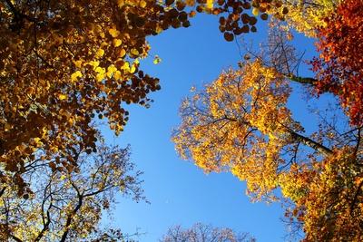 Herbstoase im Park 01