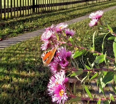 """""""WS"""" Herbstsonne durch den  Gartenzaun"""
