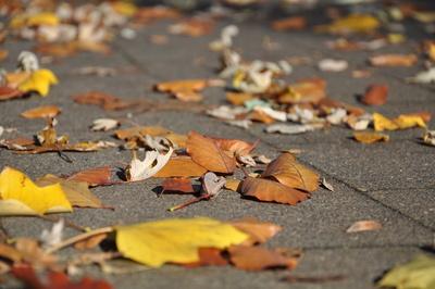 Herbstlaub auf Fußwegen