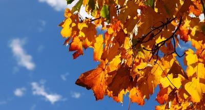 Im Licht des Herbstes 02