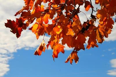 Im Licht des Herbstes 03
