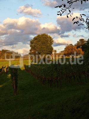 Hochsitz im Weinland