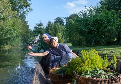 Gurkenernte im Spreewald