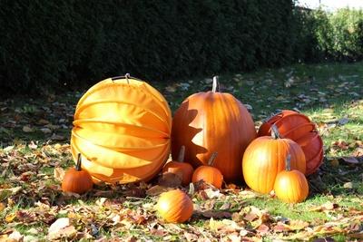 Lampions und Kürbisse im Herbst