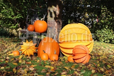 Kürbisse und Lampions im Herbst