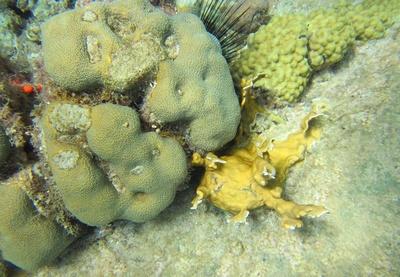 tauchen in der Karibik...guadeloupe ..3