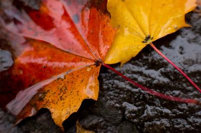 Regen-Herbst-Blatt
