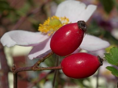 Früchte und Blüten