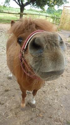 neugieriges pony
