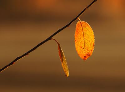 Novemberblätter