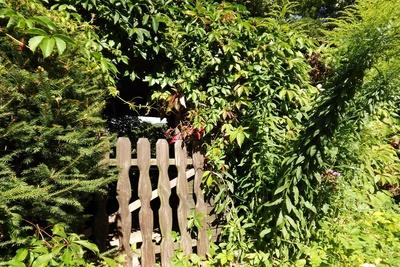 Die alte Gartentür