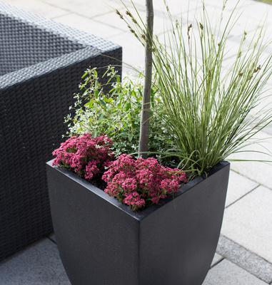 Pflanzbehälter auf Terrasse