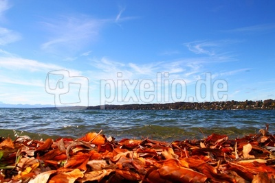 Herbst.Ufer