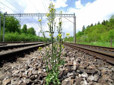 Zwischen den Gleisen
