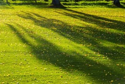 Der Herbst wirft lange Schatten