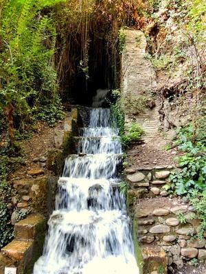 Direkt aus den Alhambra-Gärten