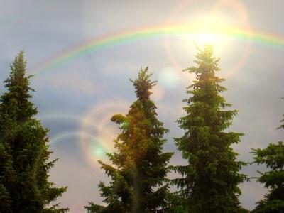 Tannen untern Regenbogen