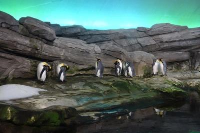 Pinguine 2 Berliner Tiergarten