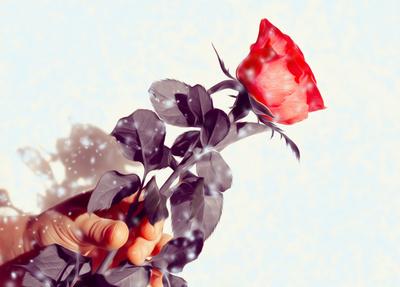Ich schenke Euch eine Rose