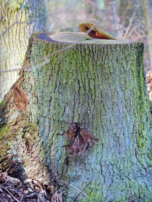 Baumstumpf im Farbenrausch