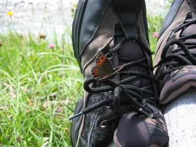 Rastplatz für Schmetterlinge...