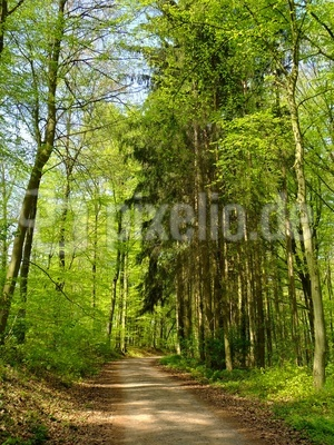 Peace in the Forest  -  Idylle im Wald