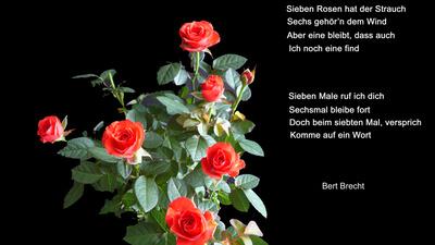 Sieben Rosen .....