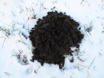 Maulwurf-Hügel im Schnee