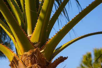 Palmendetail im Morgenlicht