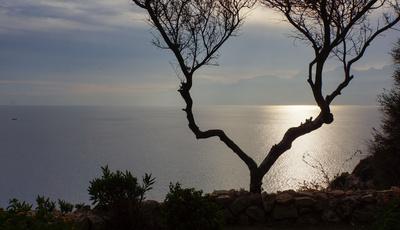 Baumgabel mit Meer und Taurusberge